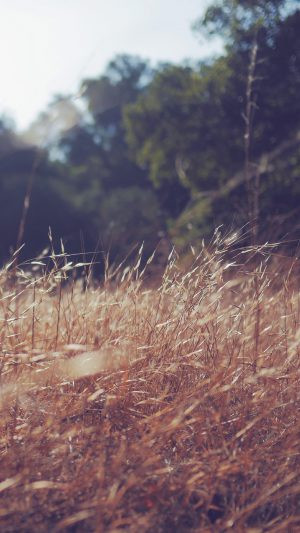 Rye Grass Field Green Mountain Cole Patrick Nature iPhone 8 wallpaper