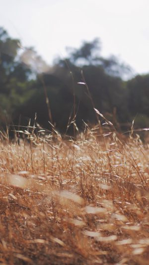 Rye Grass Field Mountain Cole Patrick Nature iPhone 8 wallpaper
