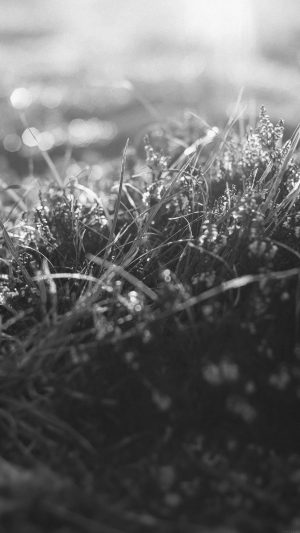 Sun Rise Green Leaf Bw Flower Grass Love Nature iPhone 8 wallpaper
