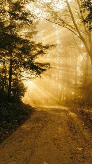 Sunny Road Wood Forest Light Tree Nature Gold iPhone 8 wallpaper