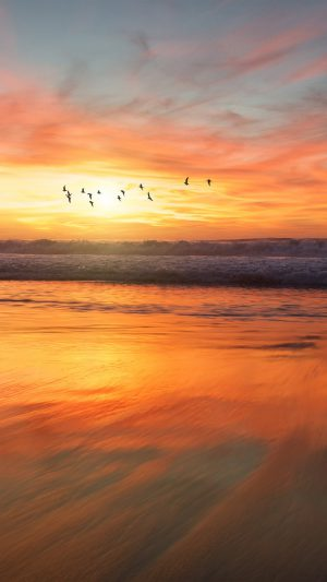 Sunset Sea Nature Orange Summer Sky Bird iPhone 8 wallpaper