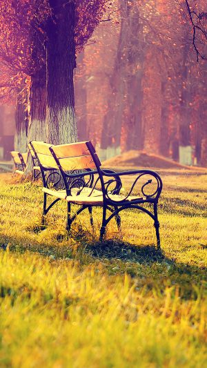 Wallpaper Fall Park Chair Lonely Nature iPhone 8 wallpaper