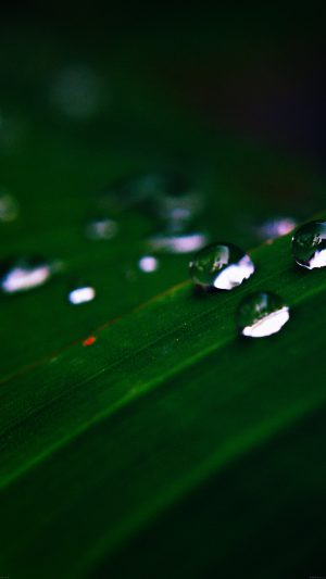 Water Drops Nature Dark Leaf After Rain Forest iPhone 8 wallpaper