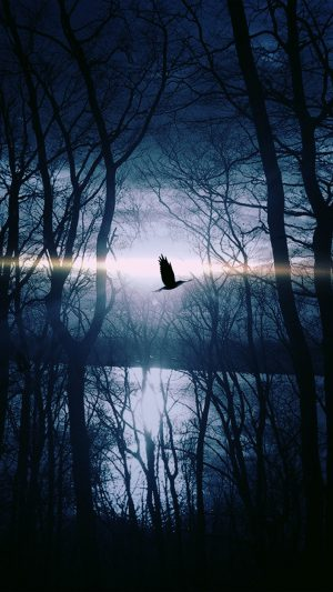 Wood Night Dark Nature Bird Fly Lake iPhone 8 wallpaper