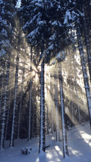 Wood Snow Winter Light Sun Nature iPhone 8 wallpaper