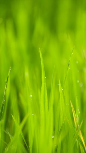 Lawn Flower Rain Bokeh Green iPhone 8 wallpaper