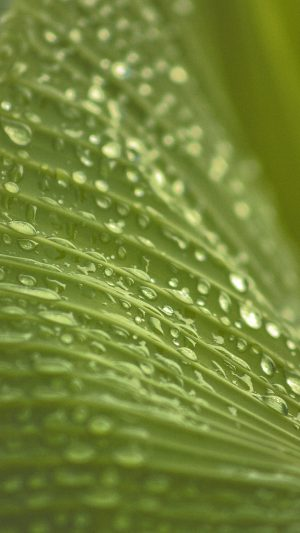 Leaf Rain Summer Green Bokeh iPhone 8 wallpaper