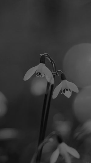 Uknown Flower Blue Bokeh Flare Dark Black Bw iPhone 8 wallpaper