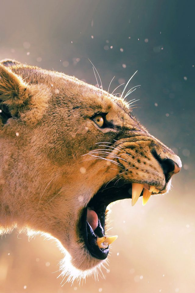 Angry Lion One Animal Nature iPhone wallpaper
