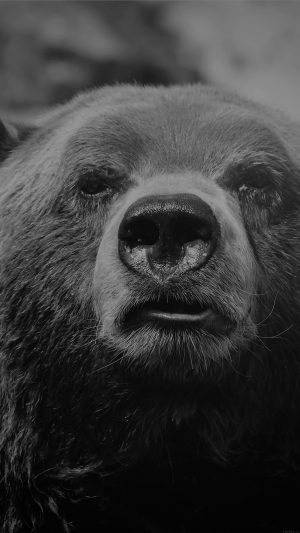Bear Face What The Hell Nature Bw Dark Animal iPhone 8 wallpaper