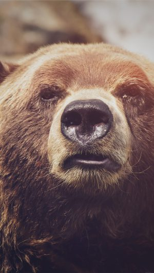 Bear Face What The Hell Nature Flare Animal iPhone 8 wallpaper
