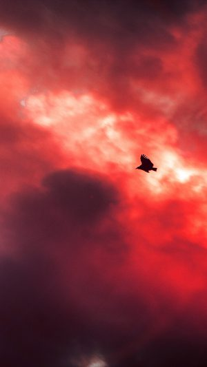 Bird Fly Sky Clouds Red Sunset Fire Nature Animal iPhone 8 wallpaper