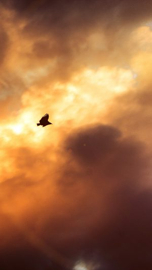 Bird Fly Sky Clouds Red Sunset Nature Animal Flare iPhone 8 wallpaper