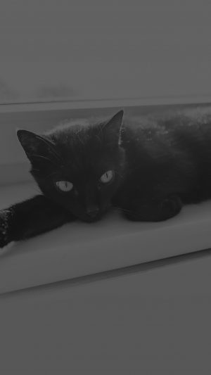 Black Cat Animal Cute Watching Dark Bw iPhone 8 wallpaper