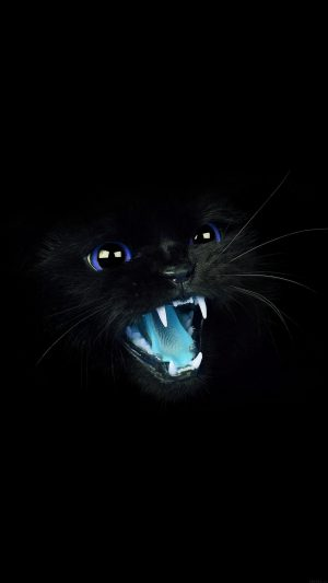 Black Cat Blue Eye Roar Animal Cute iPhone 8 wallpaper