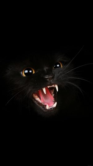 Black Cat Roar Animal Cute iPhone 8 wallpaper
