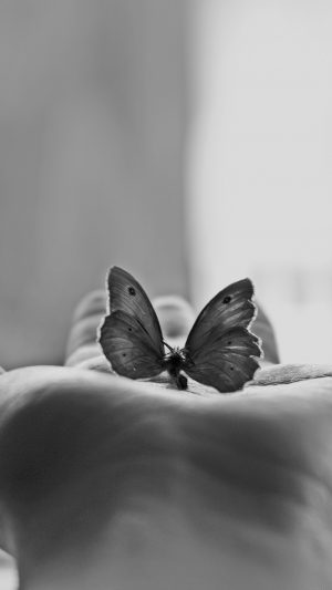 Butterfly Love In Hand Animal Bw iPhone 8 wallpaper
