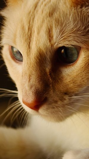 Cat Face Cute Orange Animal iPhone 8 wallpaper