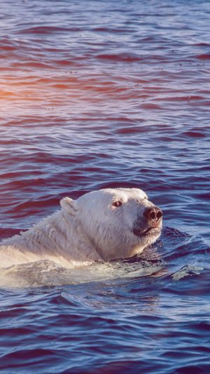 Dont Watch Me Swim Polar Bear Sea Animal Flare iPhone 8 wallpaper