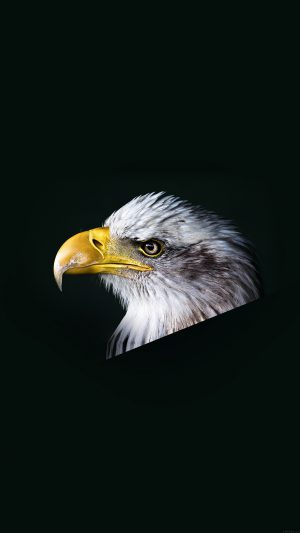 Eagle Dark Animal Bird Face iPhone 8 wallpaper
