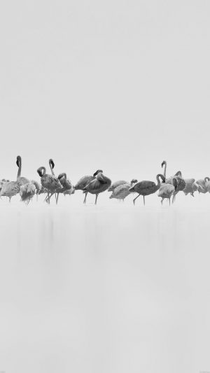 Flamingos White Peace Animal Nature Birds iPhone 8 wallpaper