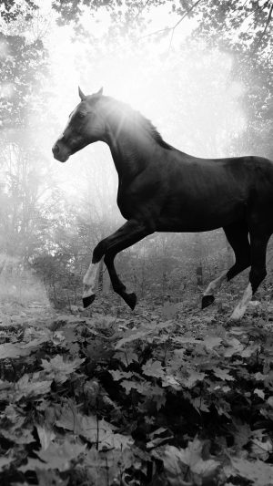 Horse Art Animal Fall Leaf Mountain Flare Dark Bw iPhone 8 wallpaper