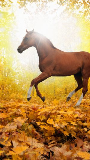 Horse Art Animal Fall Leaf Mountain Red iPhone 8 wallpaper