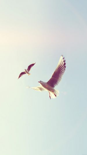 Pigeons Bird Fly Sky Animal Nature Minimal Flare iPhone 8 wallpaper