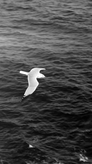 Seagull Bird Sea Ocean Animal Nature Dark iPhone 8 wallpaper