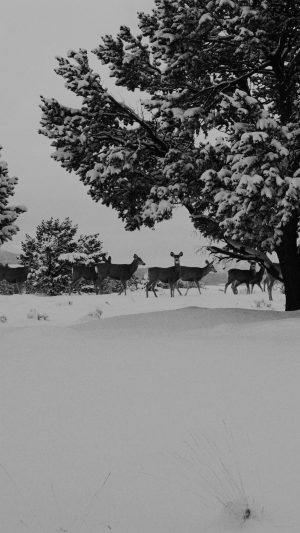 Snow Deer Winter Nature Animals iPhone 8 wallpaper