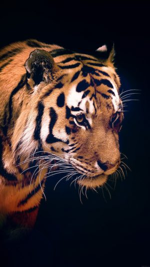 Tiger Dark Animal Love Nature iPhone 8 wallpaper
