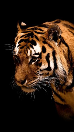 Tiger Jk Dark Animal Love Nature iPhone 8 wallpaper