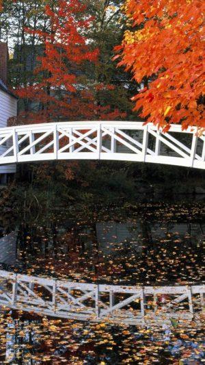 Bridge Small Leaves
